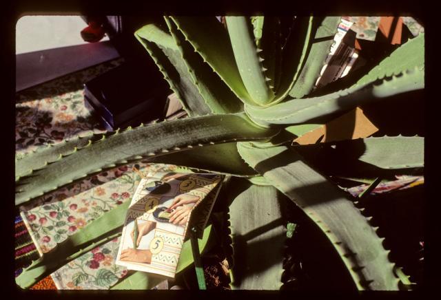 cactus21024__7